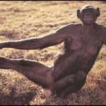 Quiero ser chimpancé
