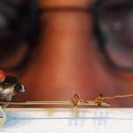 Dime, ¿cómo se amaestra una pulga?